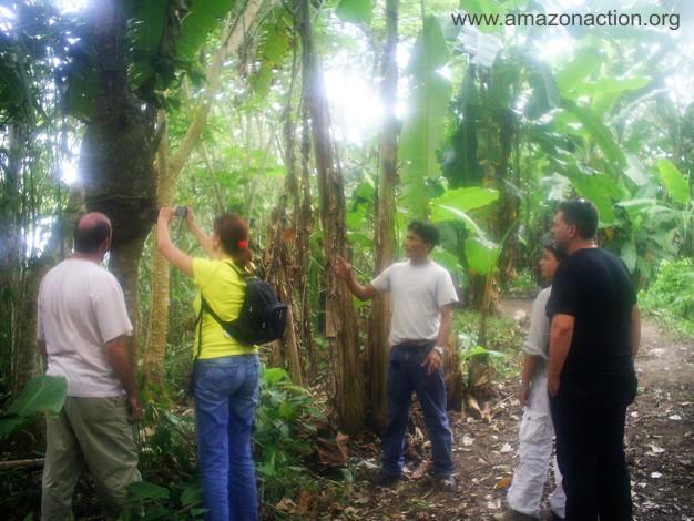 Miguel der Führer zeigt einige Heilpflanzen