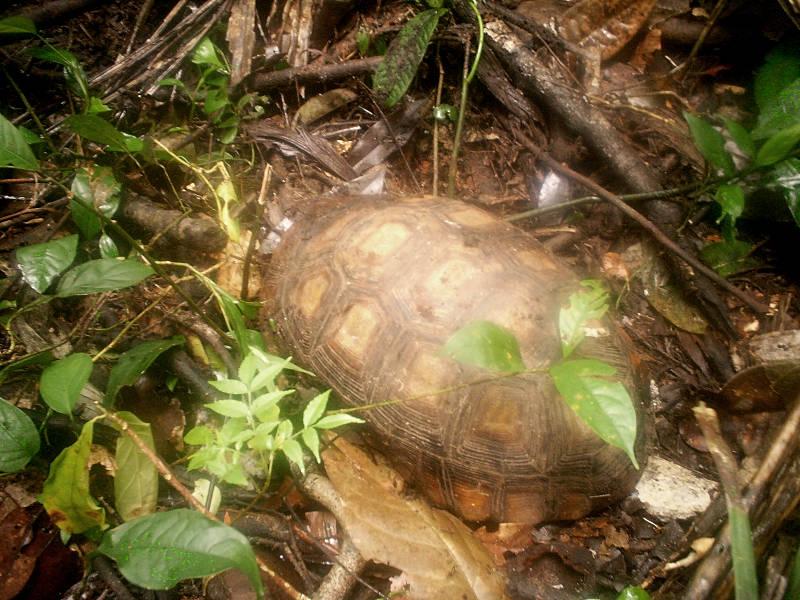 Schildkröte auf dem Wild