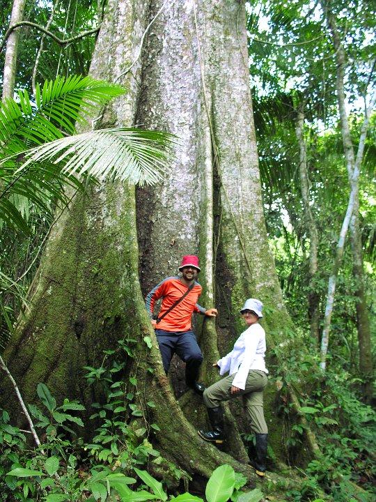 Einer der riesigen Bäume, die uns umgeben