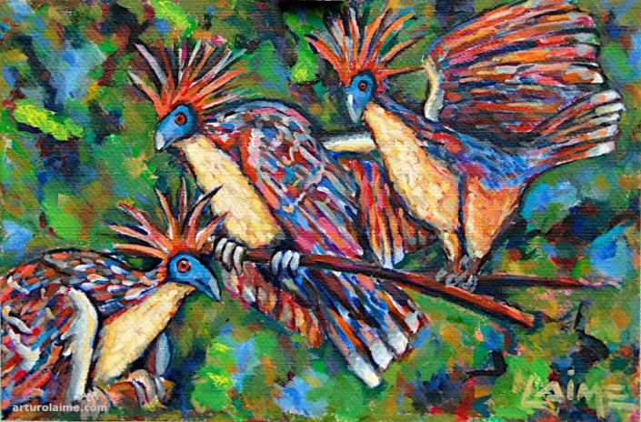 Hoatzins von Arturo Laime 720