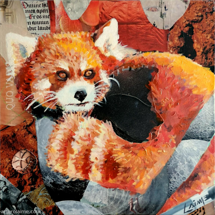 Rote Panda 720